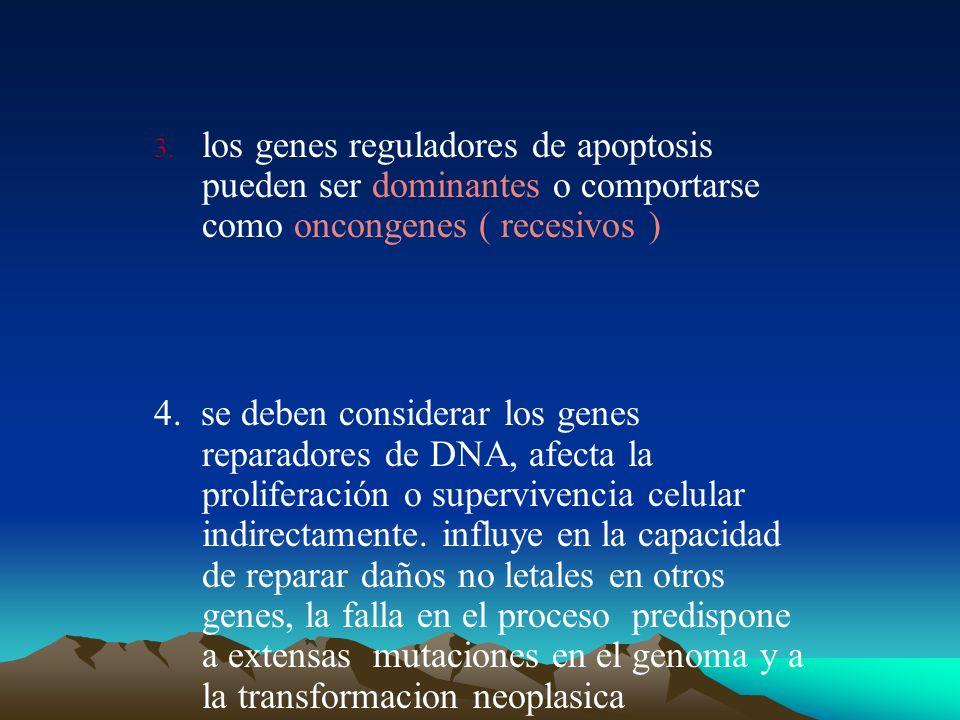 los genes reguladores de apoptosis pueden ser dominantes o comportarse como oncongenes ( recesivos )