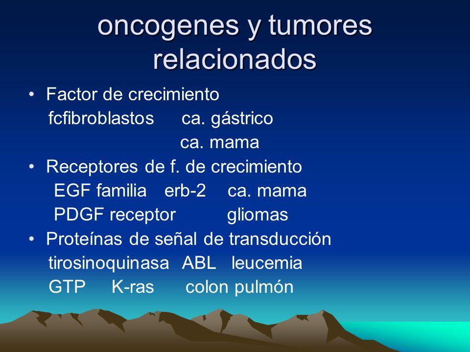 oncogenes y tumores relacionados