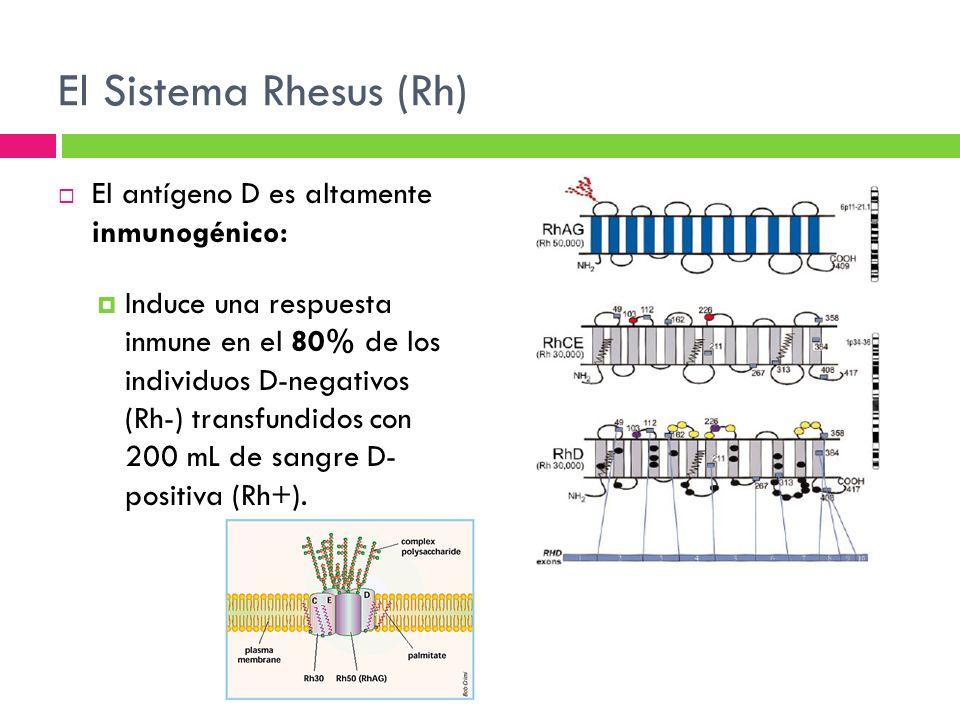 El Sistema Rhesus (Rh) El antígeno D es altamente inmunogénico:
