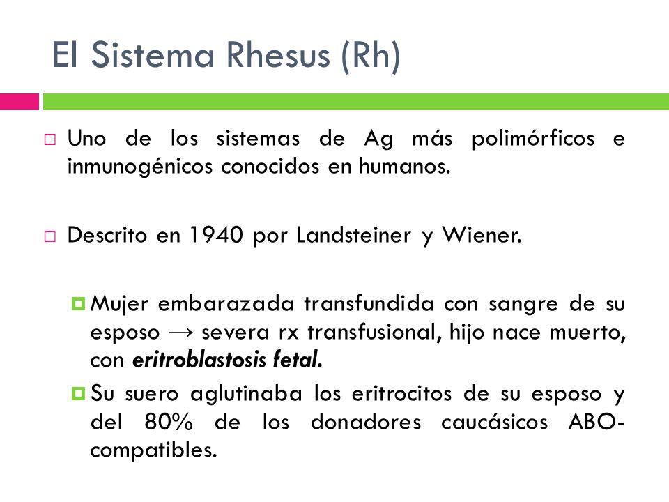 El Sistema Rhesus (Rh) Uno de los sistemas de Ag más polimórficos e inmunogénicos conocidos en humanos.