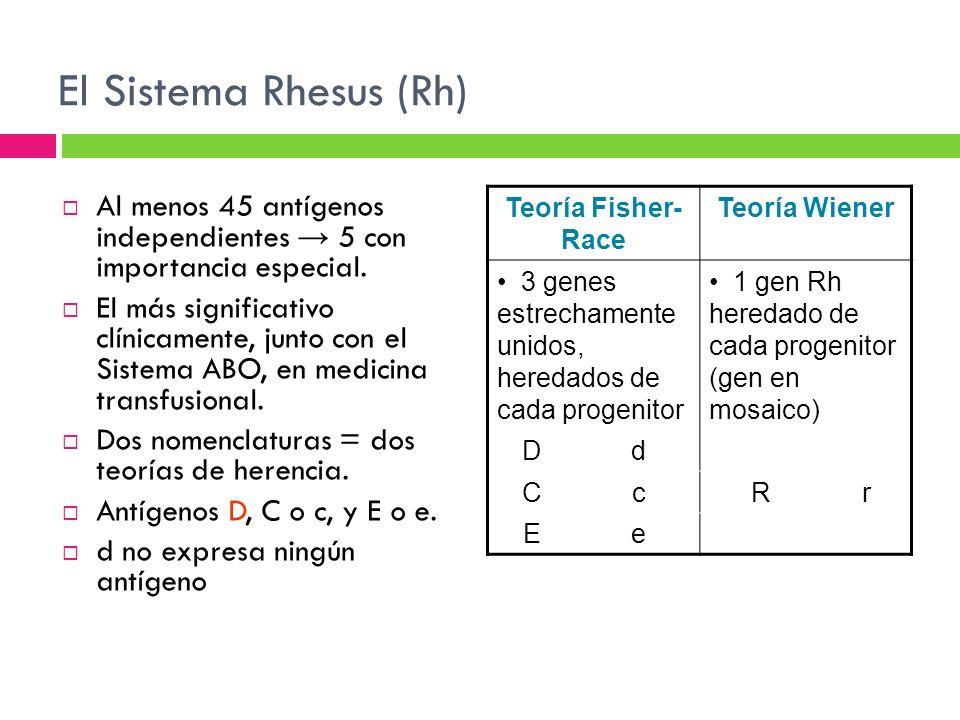 El Sistema Rhesus (Rh) Al menos 45 antígenos independientes → 5 con importancia especial.