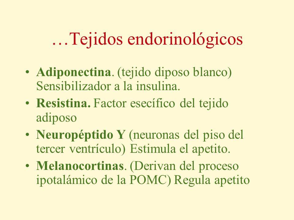 …Tejidos endorinológicos