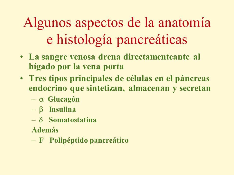 Algunos aspectos de la anatomía e histología pancreáticas