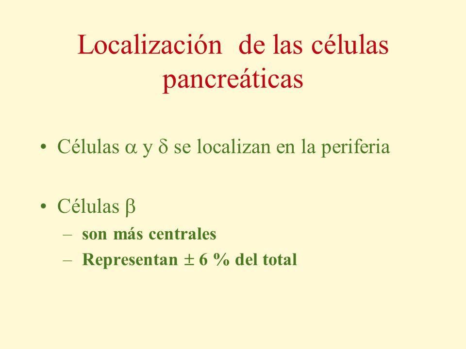Localización de las células pancreáticas