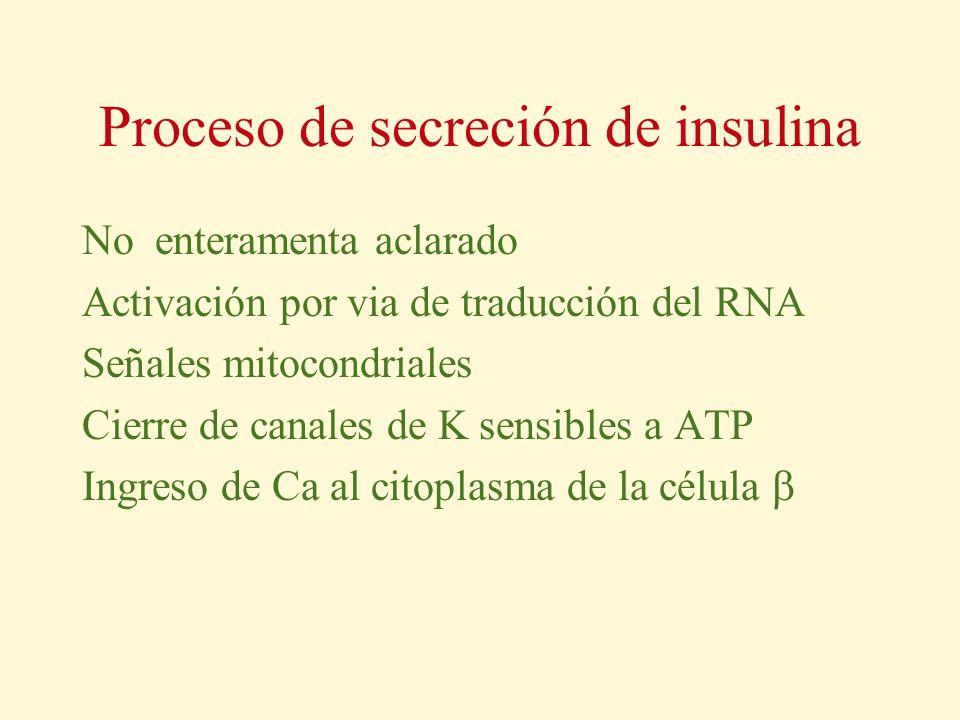 Proceso de secreción de insulina