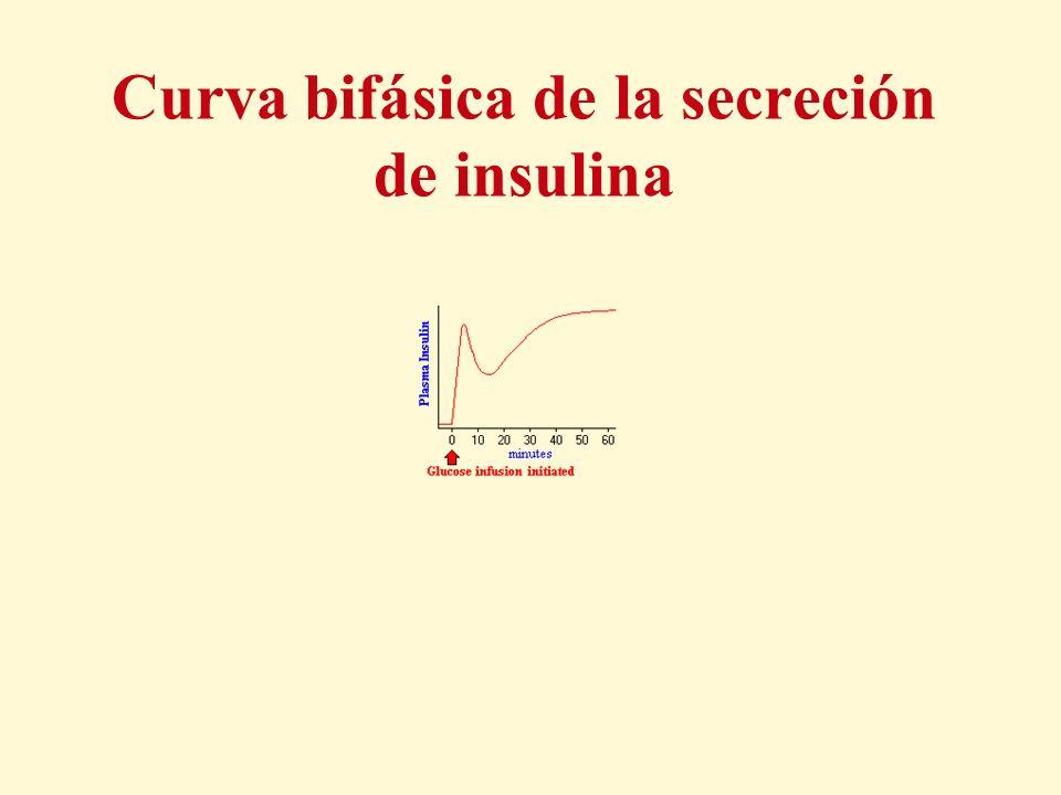 Curva bifásica de la secreción de insulina