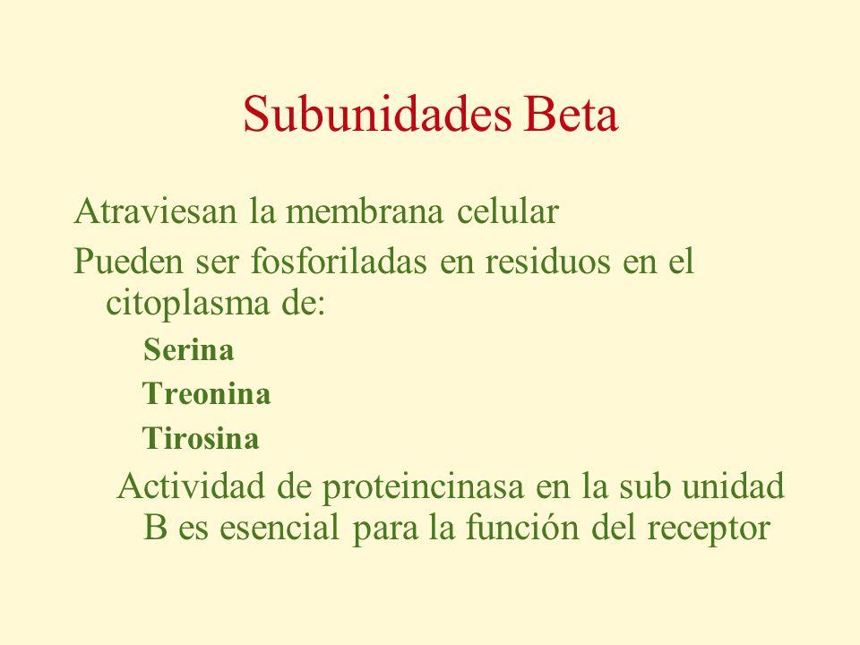 Subunidades Beta Atraviesan la membrana celular