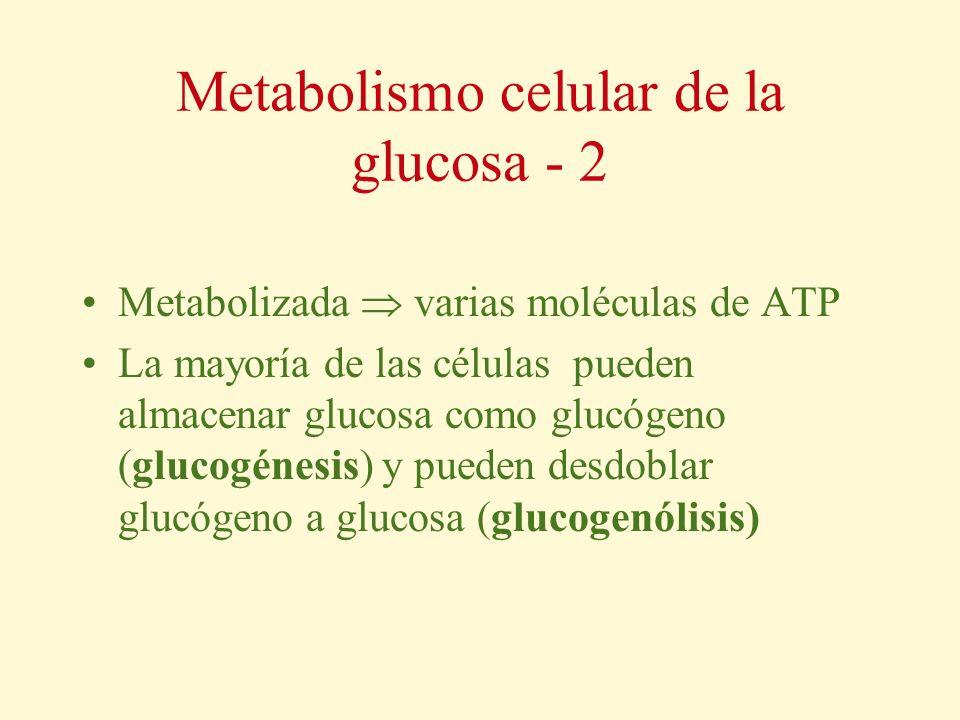 Metabolismo celular de la glucosa - 2