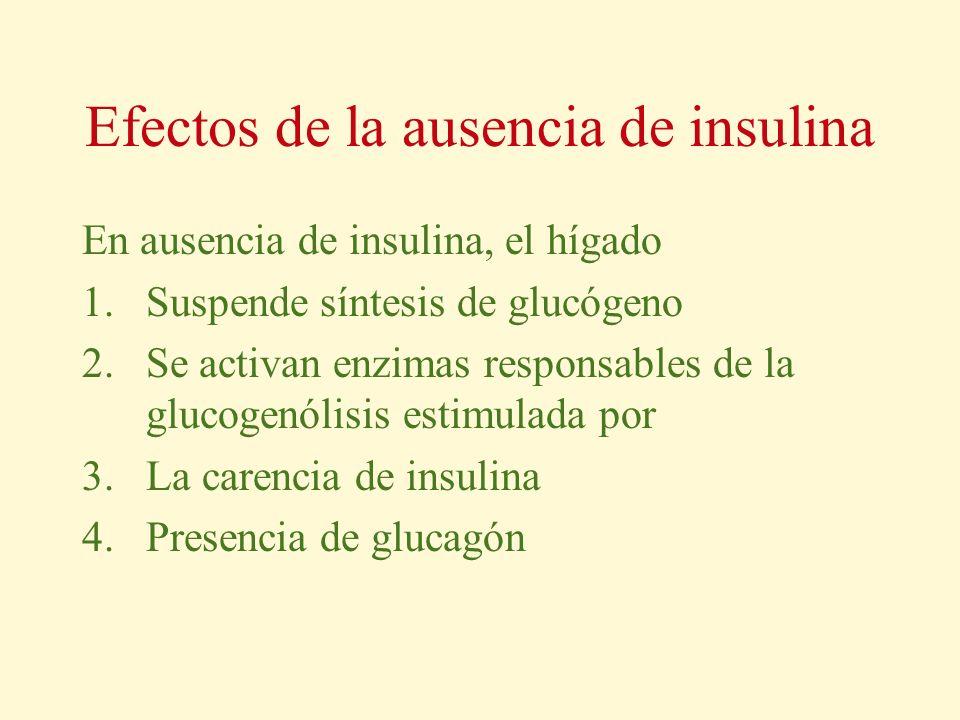Efectos de la ausencia de insulina
