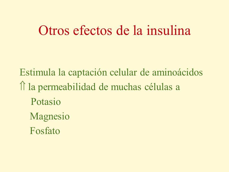 Otros efectos de la insulina