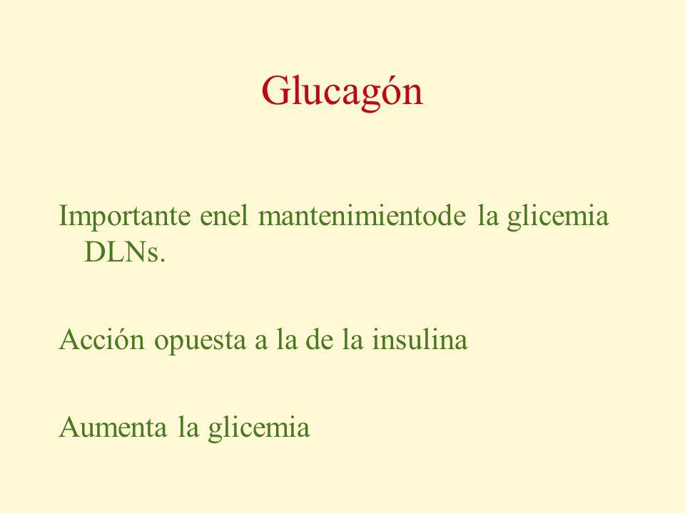 Glucagón Importante enel mantenimientode la glicemia DLNs.