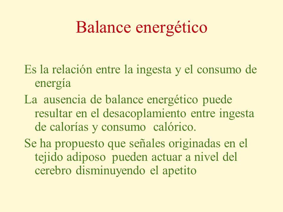 Balance energético Es la relación entre la ingesta y el consumo de energía.