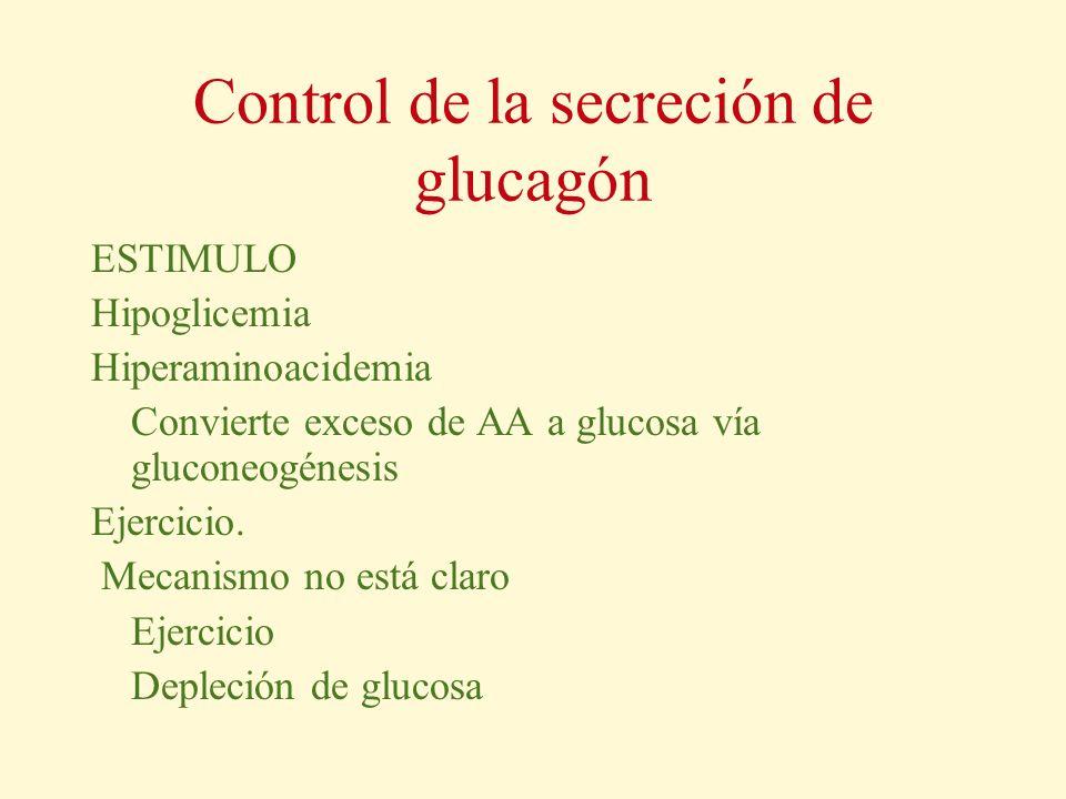 Control de la secreción de glucagón