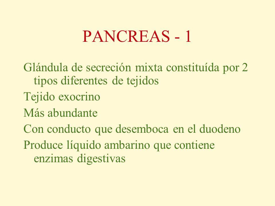 PANCREAS - 1 Glándula de secreción mixta constituída por 2 tipos diferentes de tejidos. Tejido exocrino.