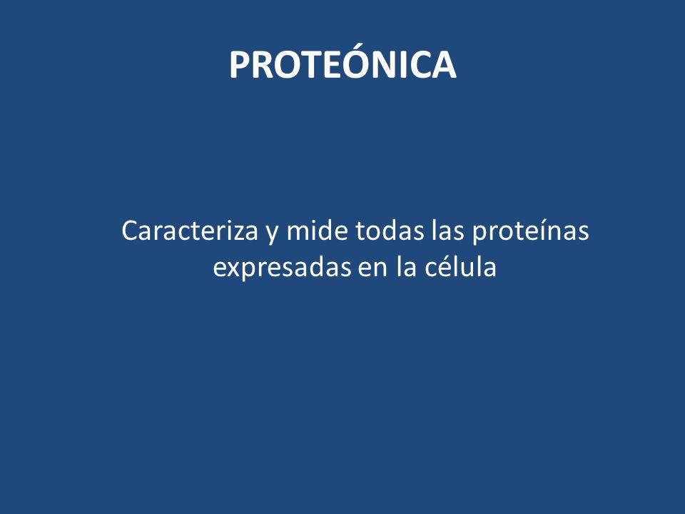 Caracteriza y mide todas las proteínas expresadas en la célula