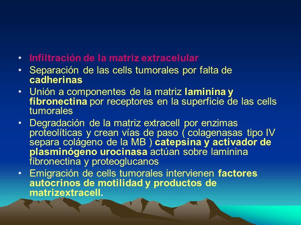 Infiltración de la matriz extracelular