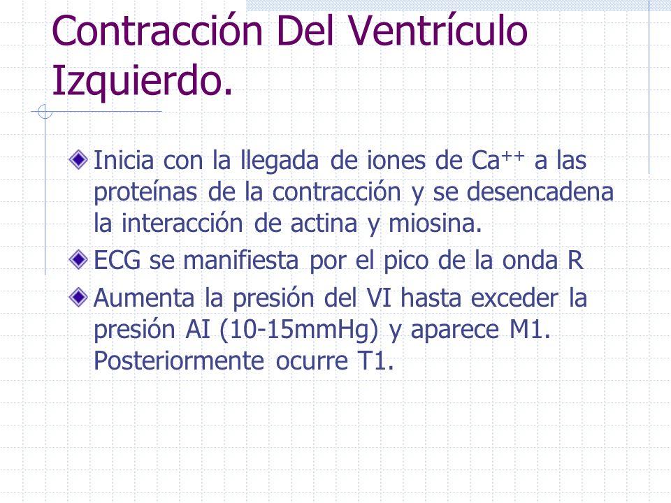 Contracción Del Ventrículo Izquierdo.
