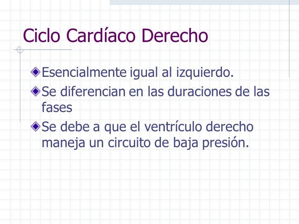 Ciclo Cardíaco Derecho