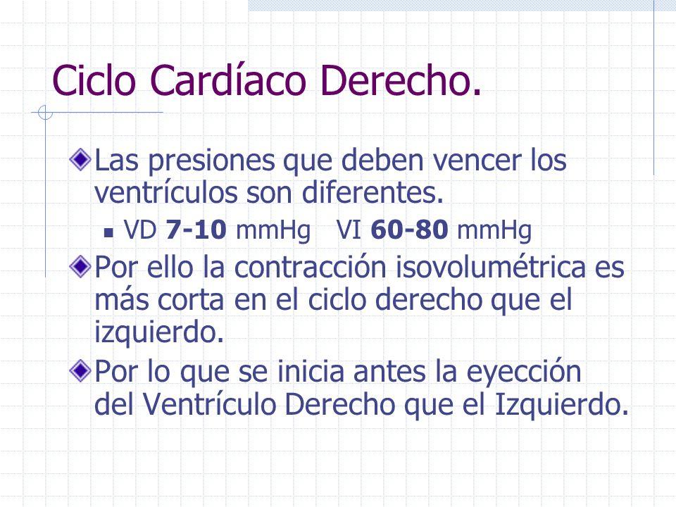 Ciclo Cardíaco Derecho.