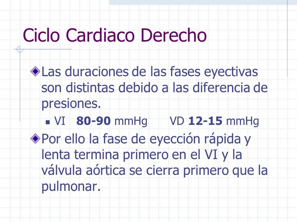 Ciclo Cardiaco Derecho