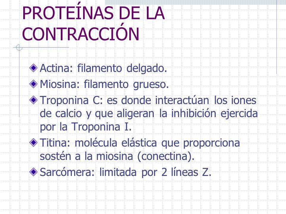 PROTEÍNAS DE LA CONTRACCIÓN