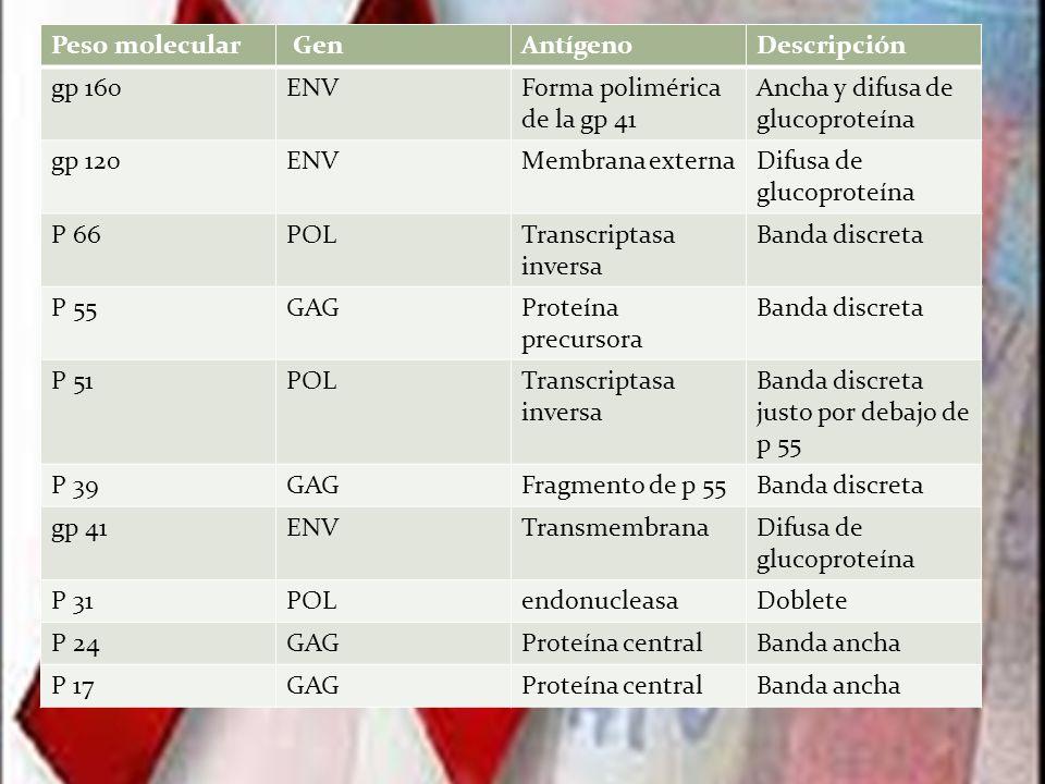 Peso molecular Gen. Antígeno. Descripción. gp 160. ENV. Forma polimérica de la gp 41. Ancha y difusa de glucoproteína.