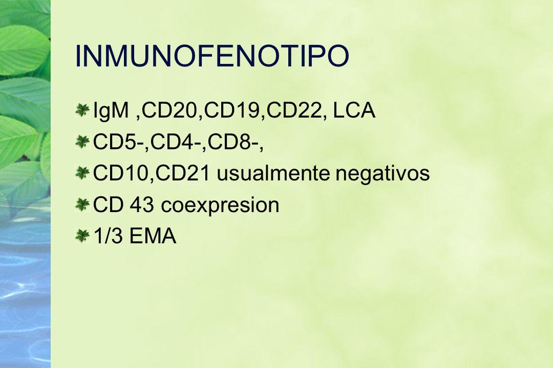 INMUNOFENOTIPO IgM ,CD20,CD19,CD22, LCA CD5-,CD4-,CD8-,