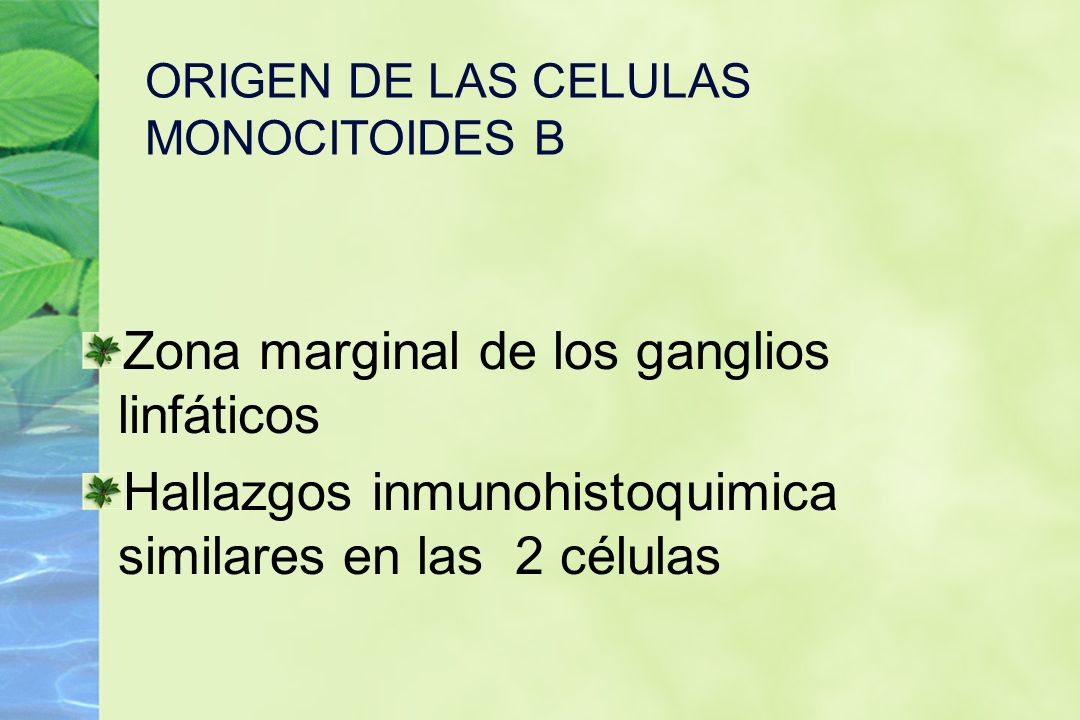 ORIGEN DE LAS CELULAS MONOCITOIDES B