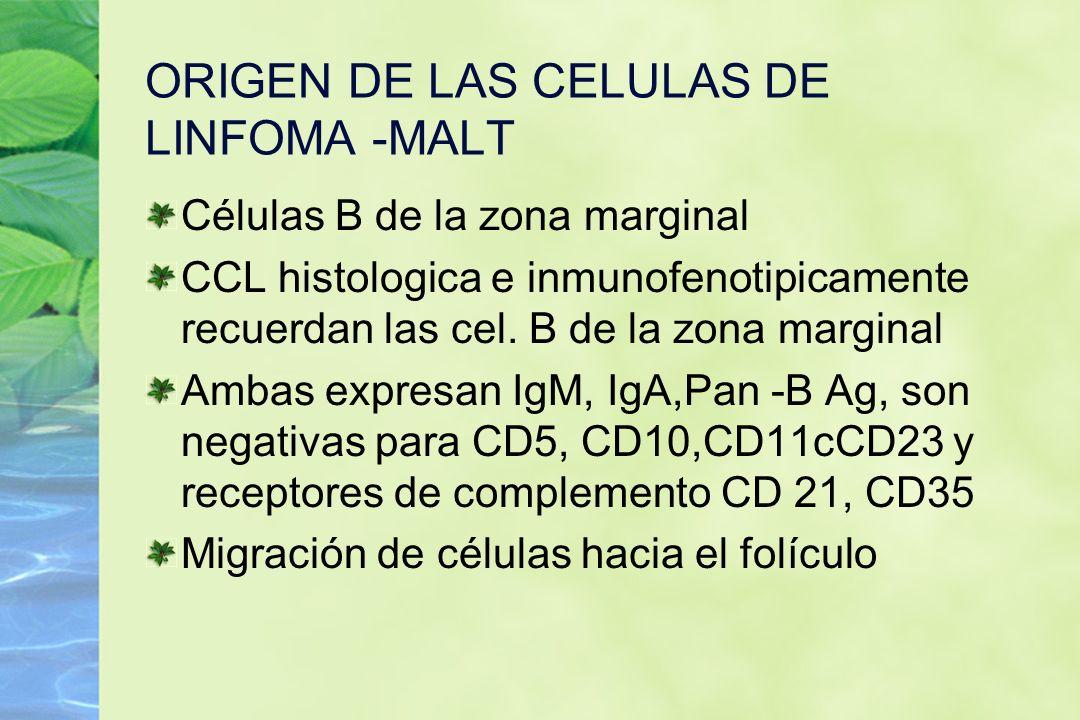 ORIGEN DE LAS CELULAS DE LINFOMA -MALT