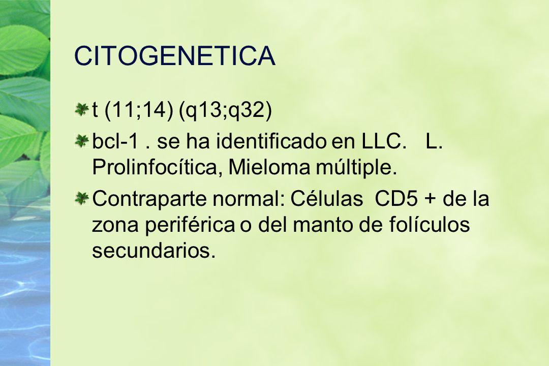 CITOGENETICA t (11;14) (q13;q32)