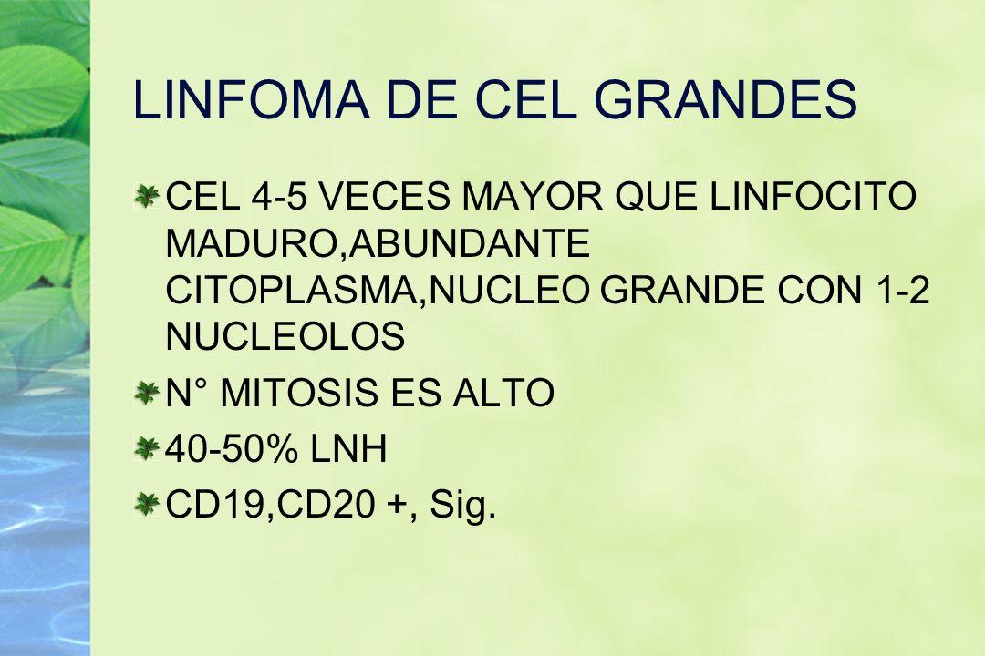 LINFOMA DE CEL GRANDES CEL 4-5 VECES MAYOR QUE LINFOCITO MADURO,ABUNDANTE CITOPLASMA,NUCLEO GRANDE CON 1-2 NUCLEOLOS.