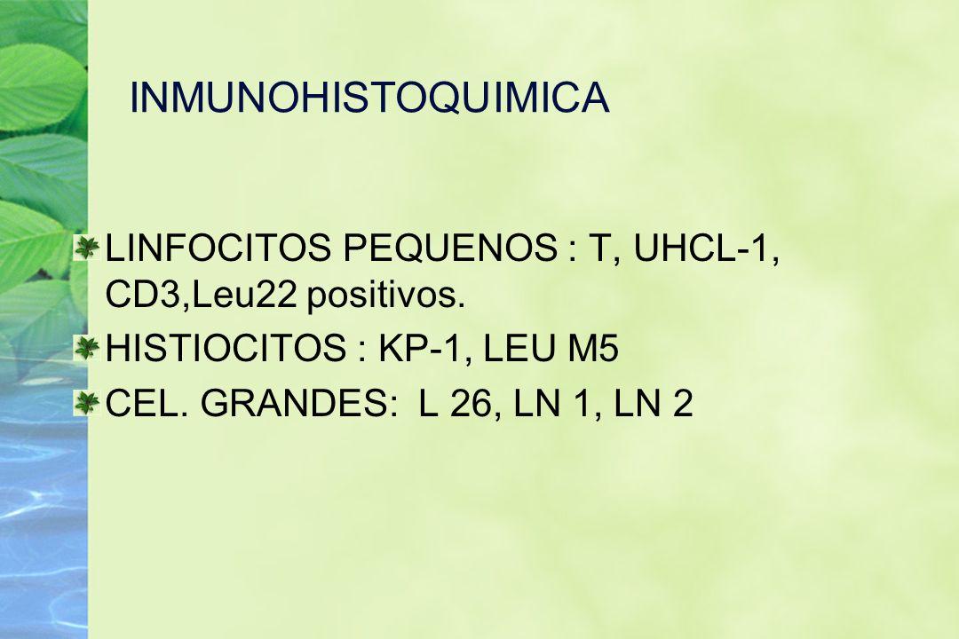 INMUNOHISTOQUIMICA LINFOCITOS PEQUENOS : T, UHCL-1, CD3,Leu22 positivos. HISTIOCITOS : KP-1, LEU M5.
