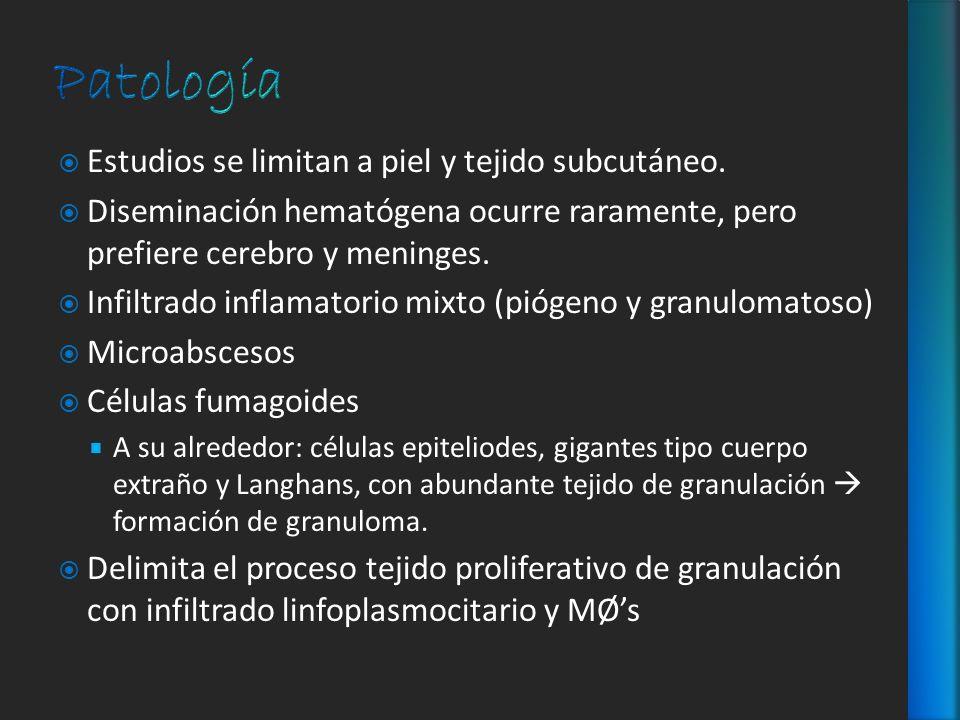 Patología Estudios se limitan a piel y tejido subcutáneo.