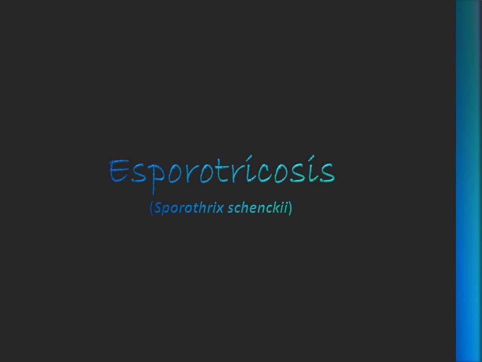 Esporotricosis (Sporothrix schenckii)