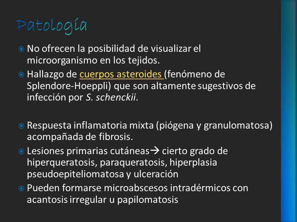 PatologíaNo ofrecen la posibilidad de visualizar el microorganismo en los tejidos.