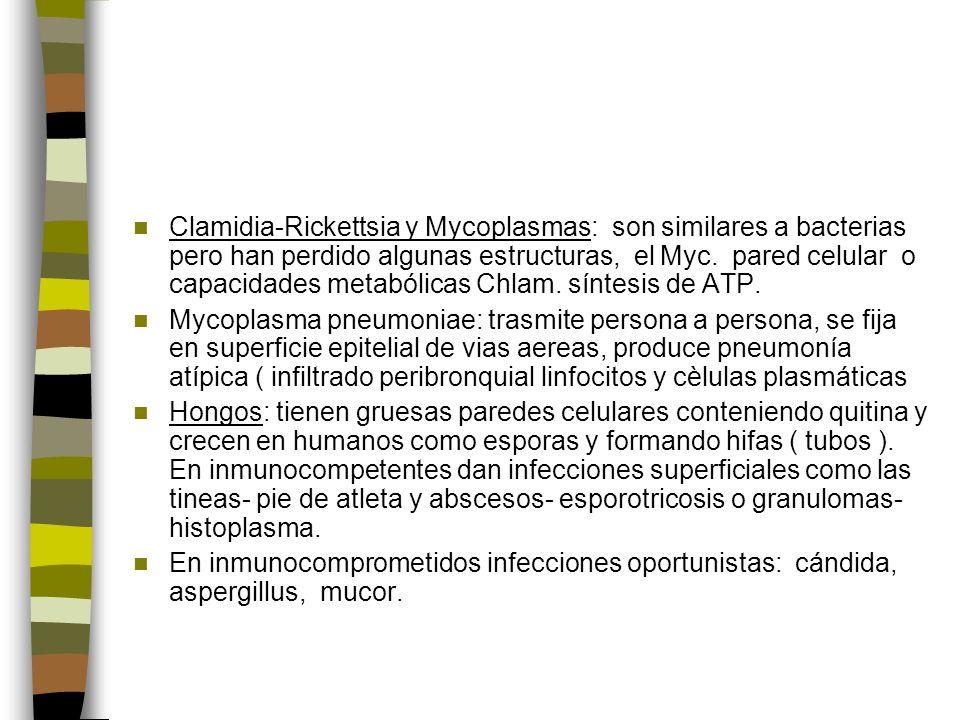Clamidia-Rickettsia y Mycoplasmas: son similares a bacterias pero han perdido algunas estructuras, el Myc. pared celular o capacidades metabólicas Chlam. síntesis de ATP.