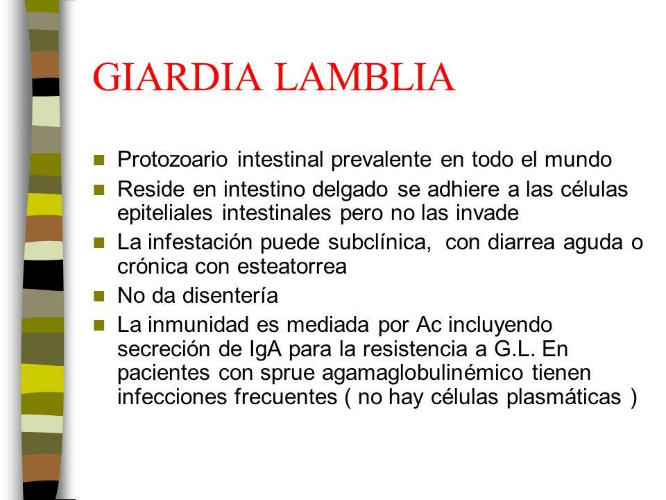 GIARDIA LAMBLIA Protozoario intestinal prevalente en todo el mundo