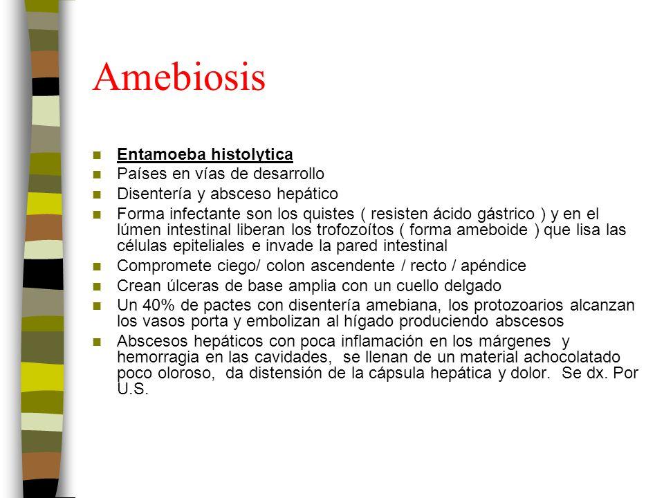 Amebiosis Entamoeba histolytica Países en vías de desarrollo