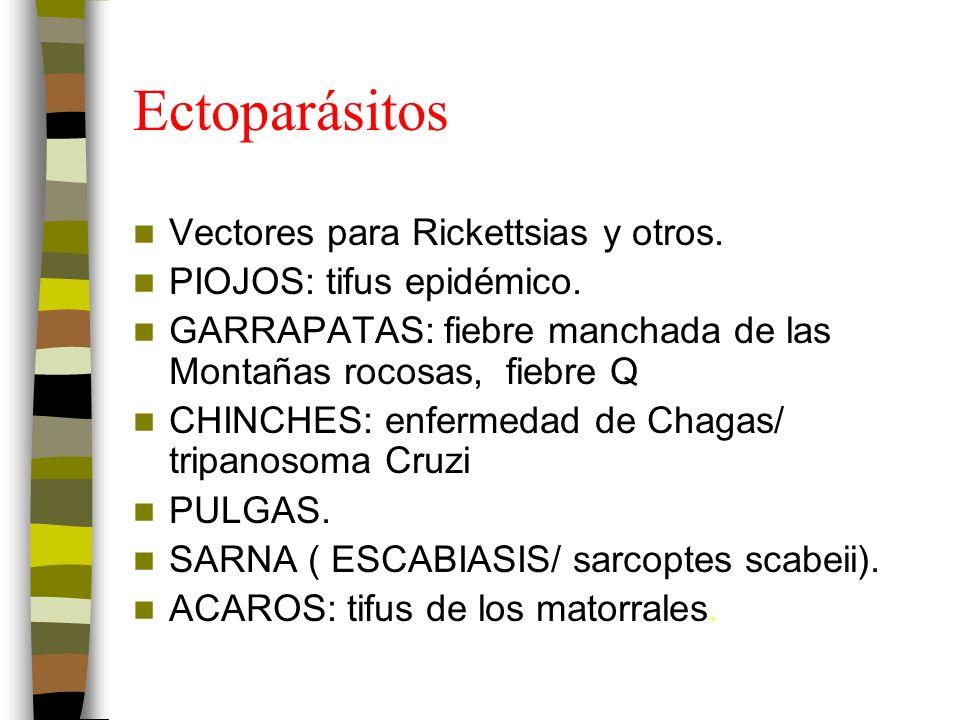 Ectoparásitos Vectores para Rickettsias y otros.