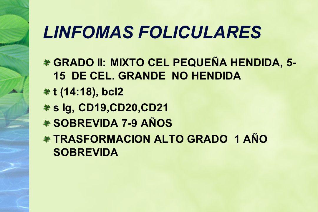 LINFOMAS FOLICULARESGRADO II: MIXTO CEL PEQUEÑA HENDIDA, 5-15 DE CEL. GRANDE NO HENDIDA. t (14:18), bcl2.