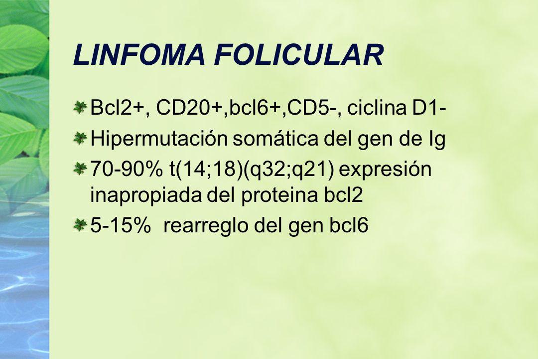 LINFOMA FOLICULAR Bcl2+, CD20+,bcl6+,CD5-, ciclina D1-