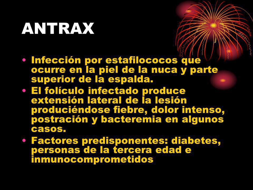 ANTRAX Infección por estafilococos que ocurre en la piel de la nuca y parte superior de la espalda.