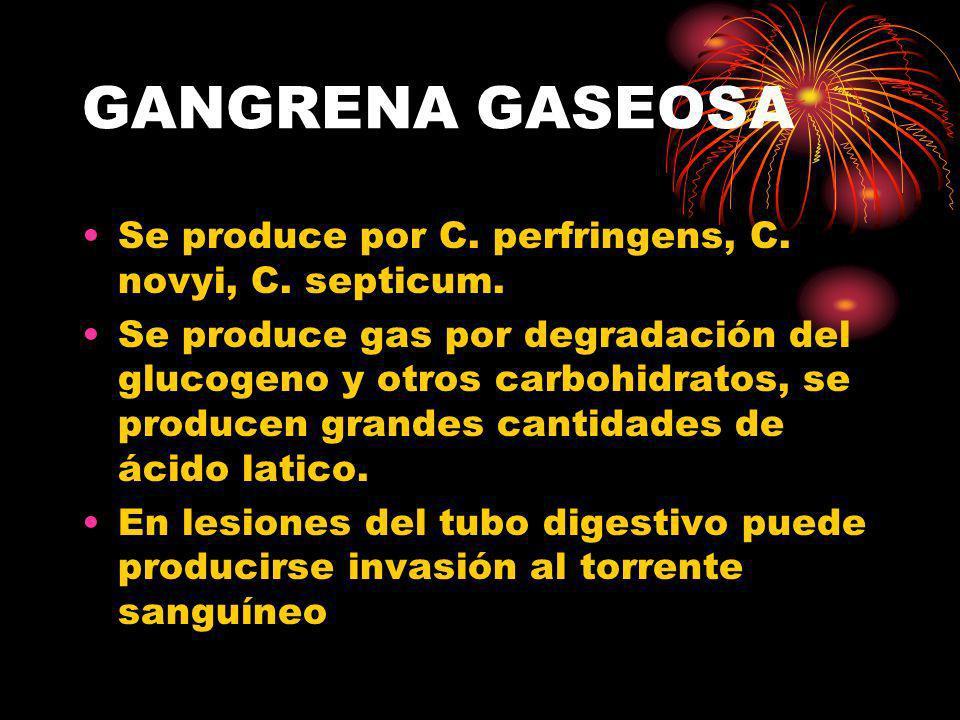 GANGRENA GASEOSA Se produce por C. perfringens, C. novyi, C. septicum.