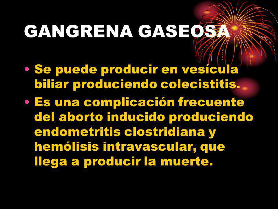 GANGRENA GASEOSA Se puede producir en vesícula biliar produciendo colecistitis.