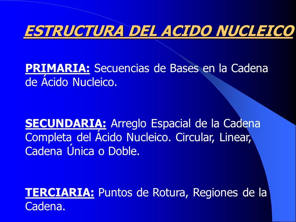 ESTRUCTURA DEL ACIDO NUCLEICO