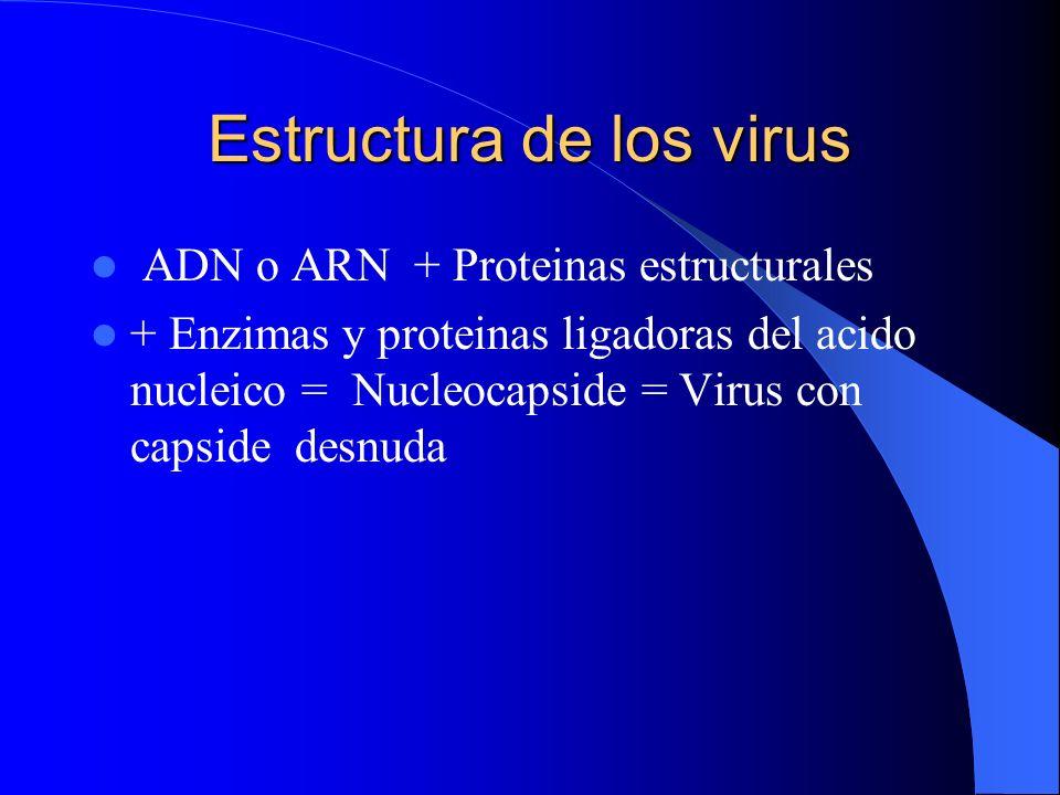 Estructura de los virus