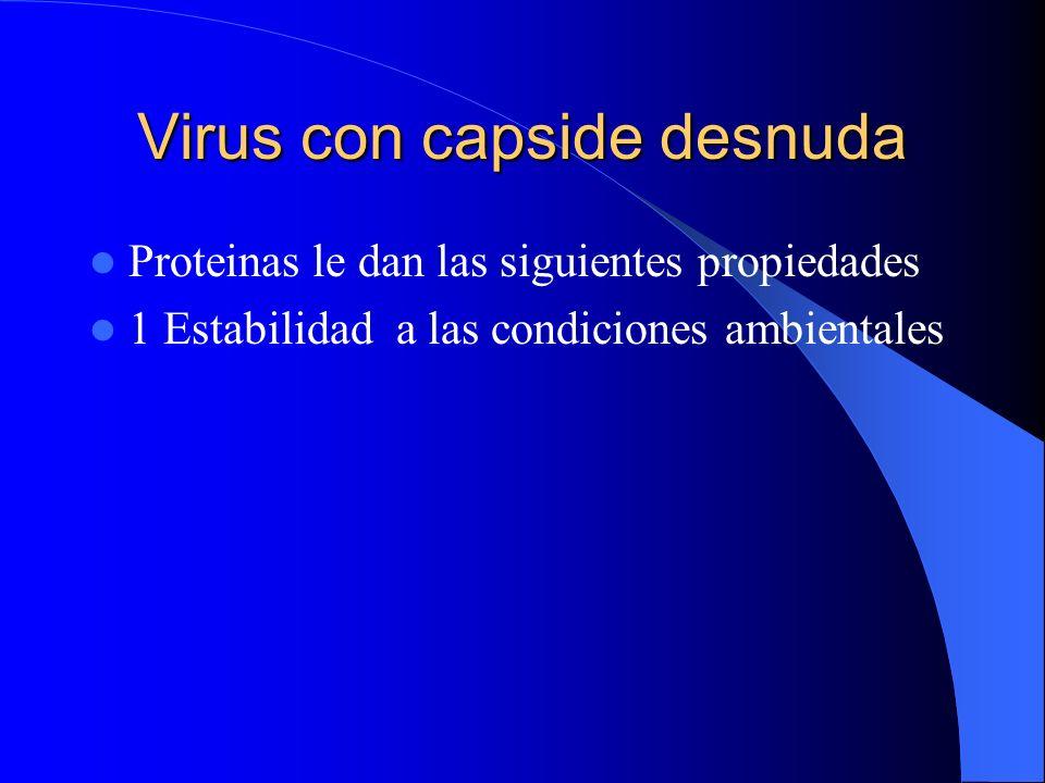 Virus con capside desnuda