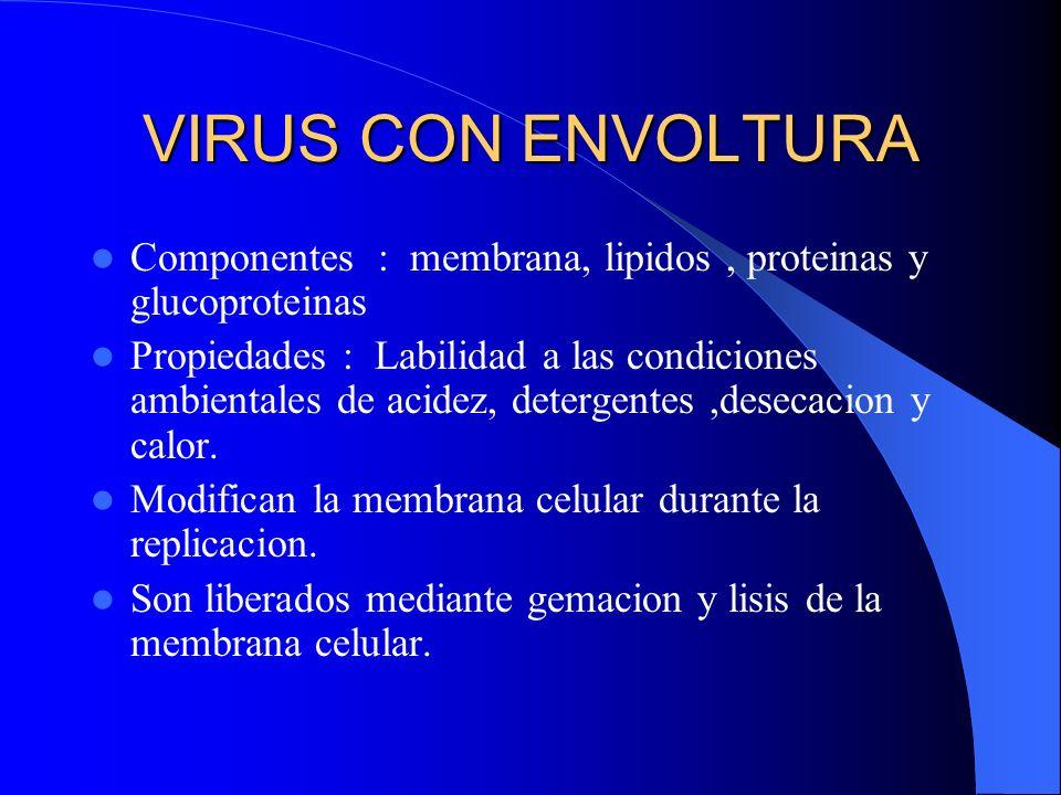 VIRUS CON ENVOLTURA Componentes : membrana, lipidos , proteinas y glucoproteinas.