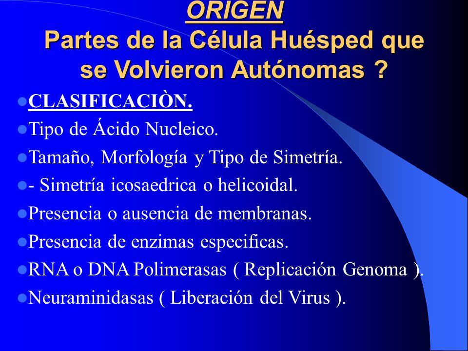 ORIGEN Partes de la Célula Huésped que se Volvieron Autónomas