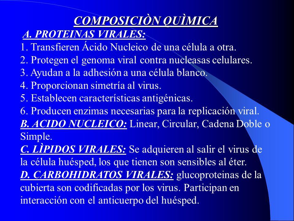 COMPOSICIÒN QUÌMICA A. PROTEINAS VIRALES: 1. Transfieren Ácido Nucleico de una célula a otra.